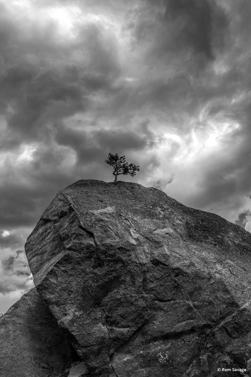 "Today's Photo Of The Day is ""Rock Bonsai"" by Rom Savage. Location: Colorado."