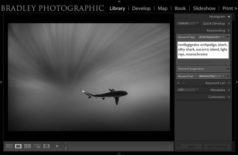 Screen shot of using keywords in Adobe Lightroom