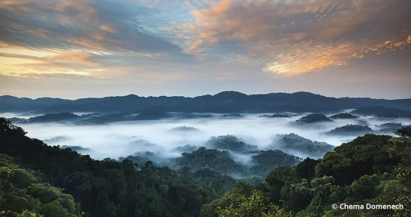image of Nyungwe