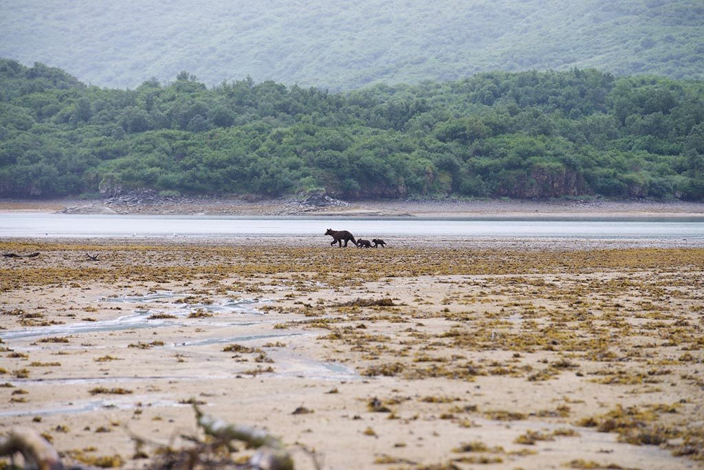 High And Low Tide Effects On Wildlife Photography