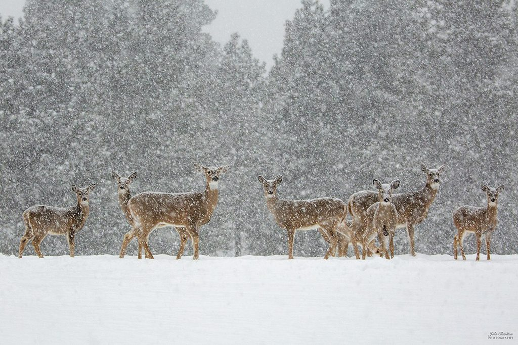 """Today's Photo Of The Day is """"Let It Snow"""" by Jola Charlton. Location: Republic, Washington."""