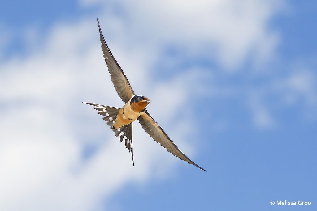 example image using a wide angle for bird photography