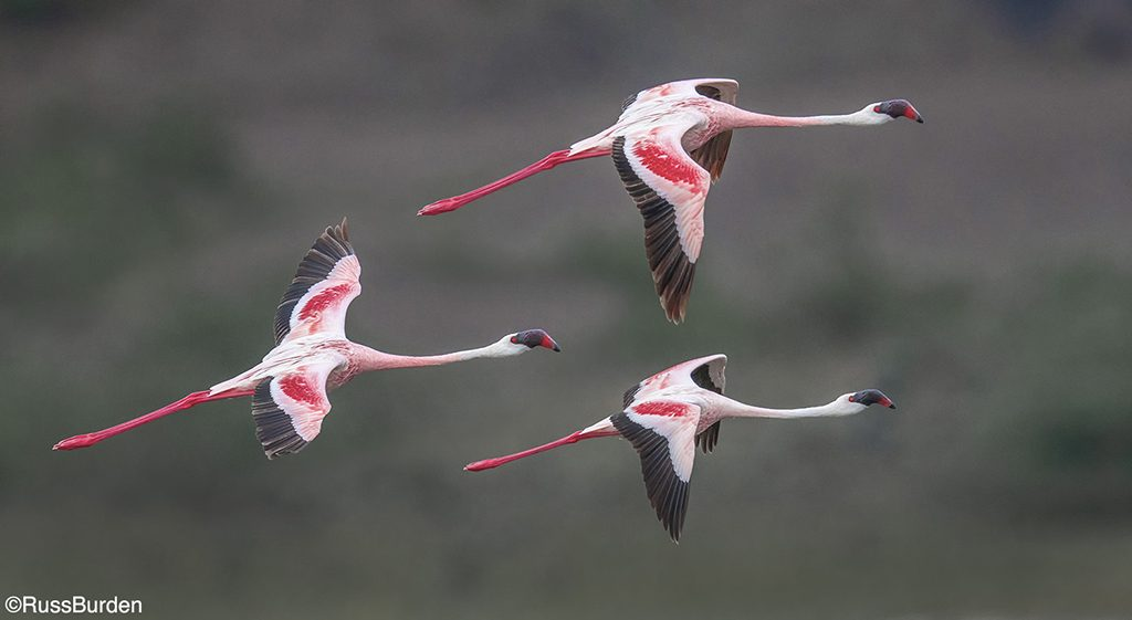 How To Get The Best Birds In Flight Photos