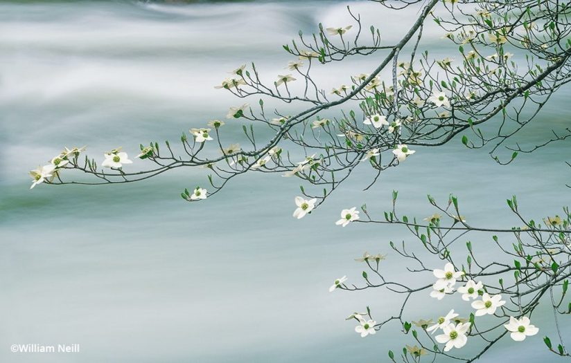 long exposure of a river beneath a dogwood branch