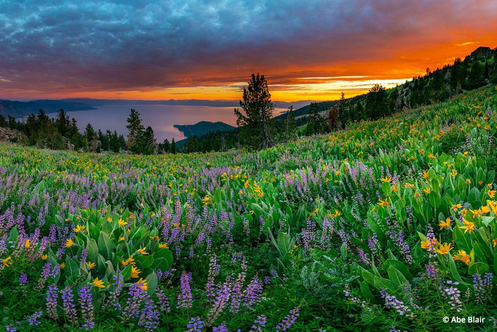 A meadow off the Tahoe Rim Trail