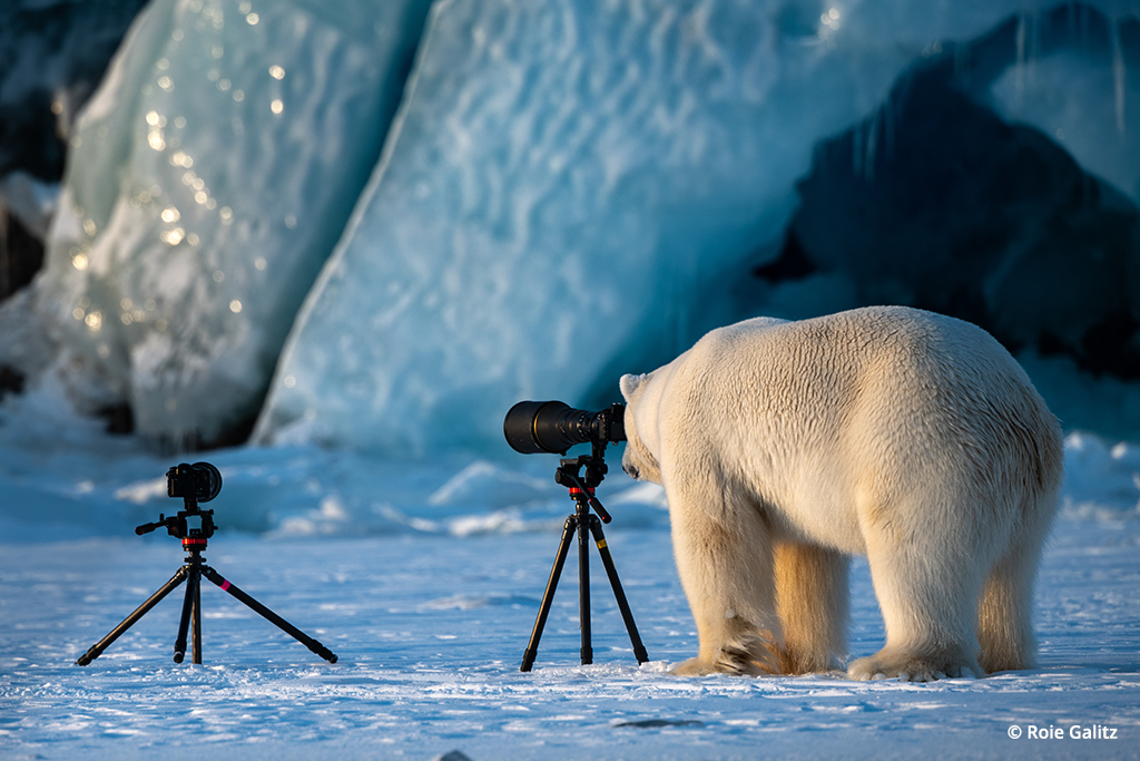 Polar Bear Learning Photography