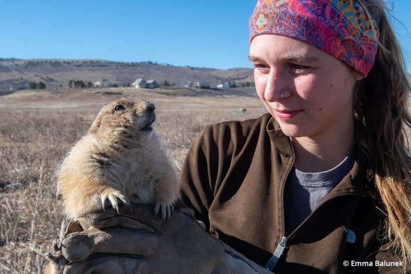 Image of a prairie dog relocator from the Humane Society