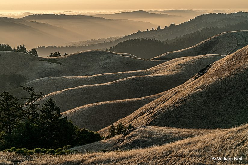 Image of Ridges, Mt. Tamalpais State Park, California, 2019.
