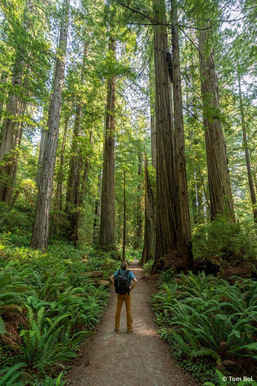 adventure photography, hiking in the redwoods