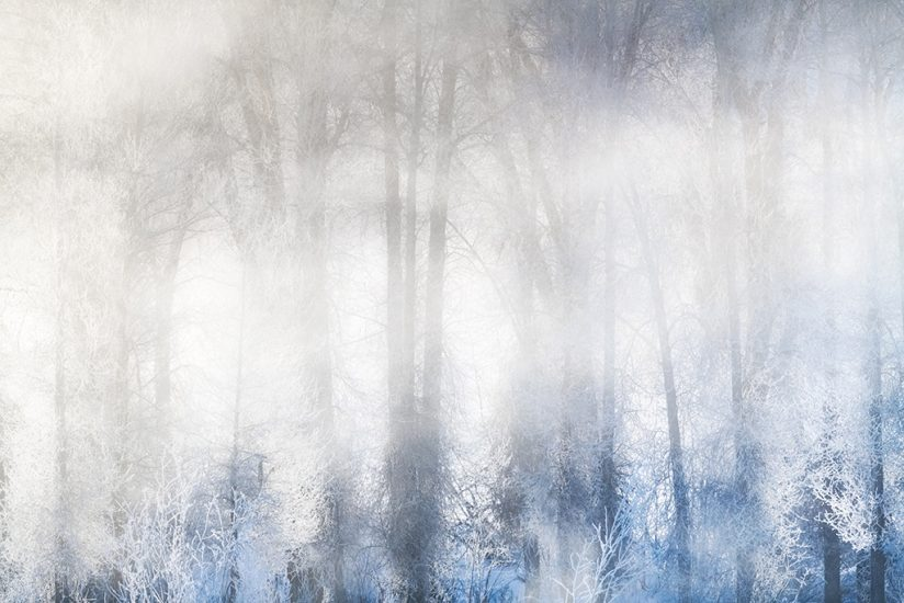 Winter landscape photography: fog and trees