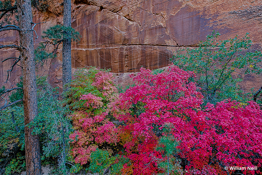 Landscape image taken in Zion National Park