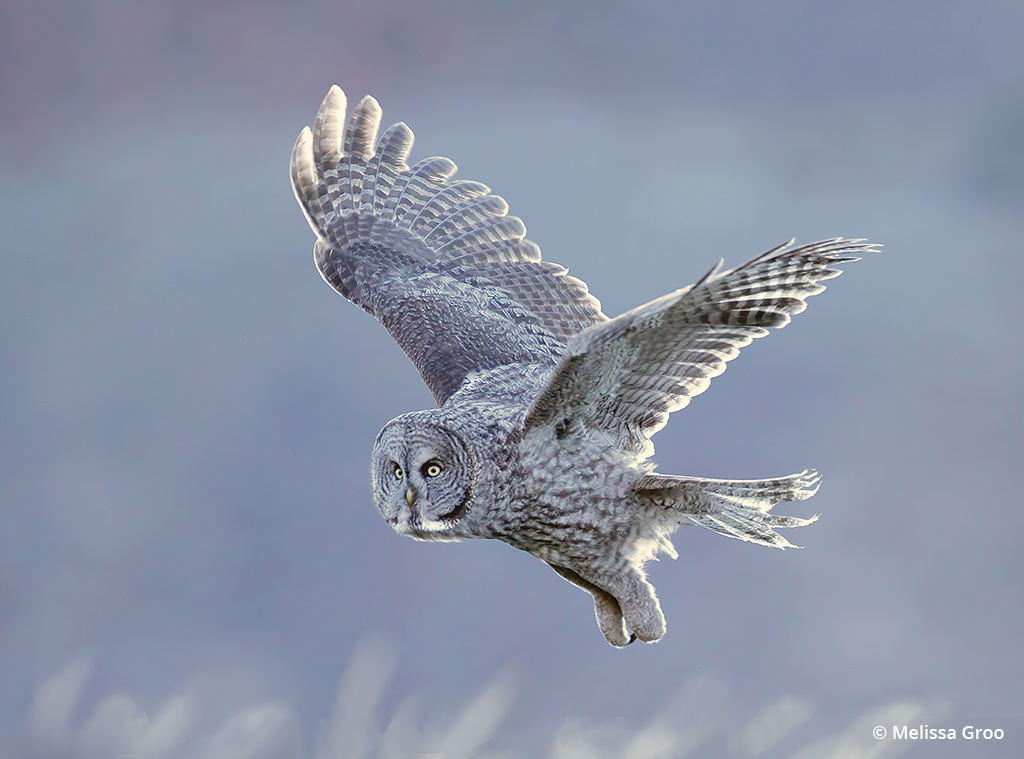 How To Find And Photograph Owls With Good Field Ethics