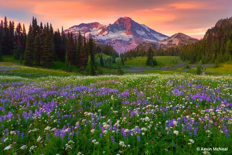 Image illustrating wildflower photography tips for shooting at sunset.