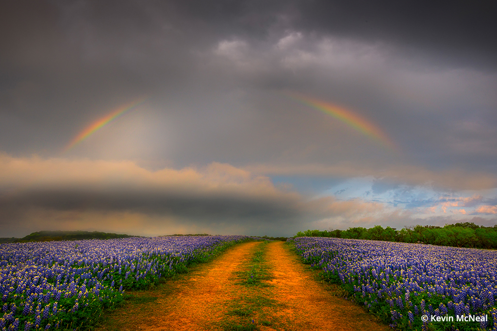 Image of a rainbow and wildflowers.