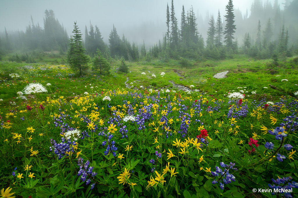 Image illustrating color harmony in wildflower photography.