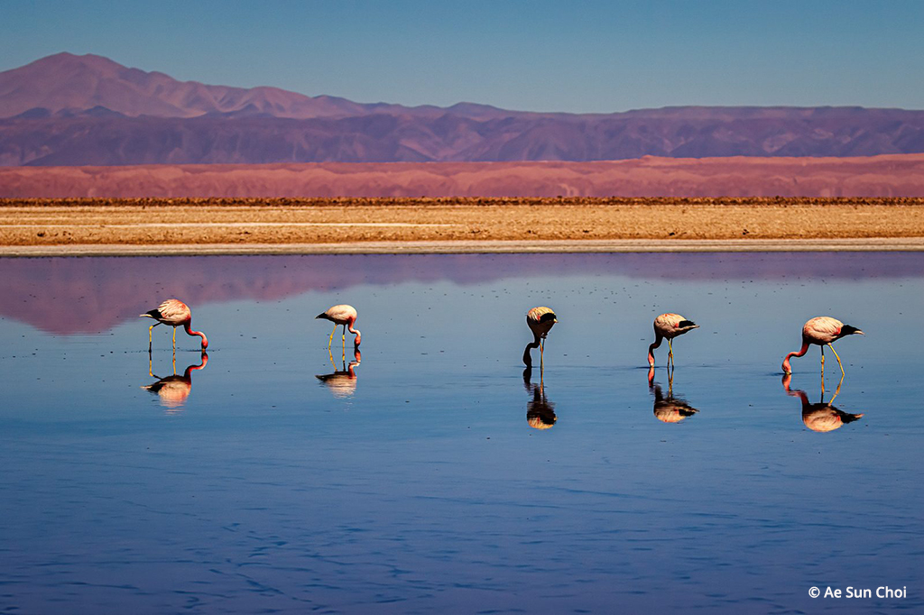 Andean Landscape and Flamingos By Ae Sun Choi