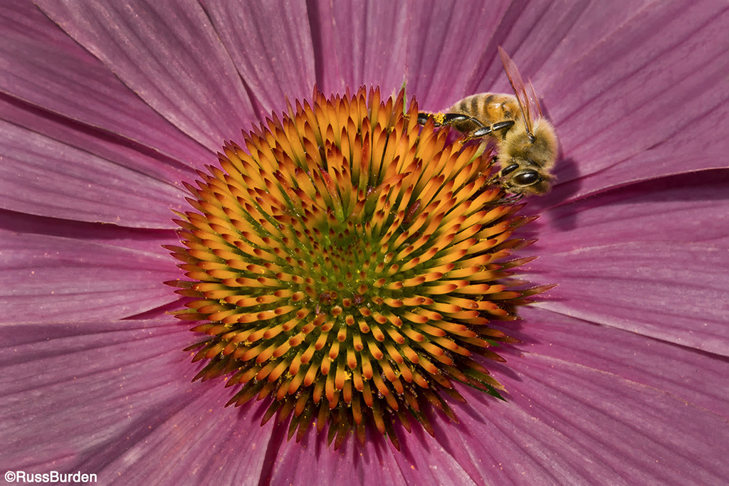 Macro photography of a bee on a flower