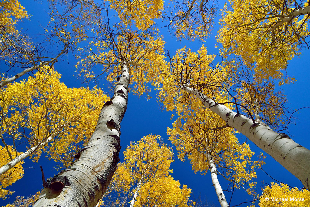 Yellow Meets Blue By Michael Morse