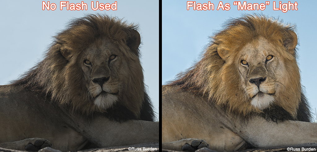 Get The Most Out Of Your Flash, Part 2 - OverStockPhoto