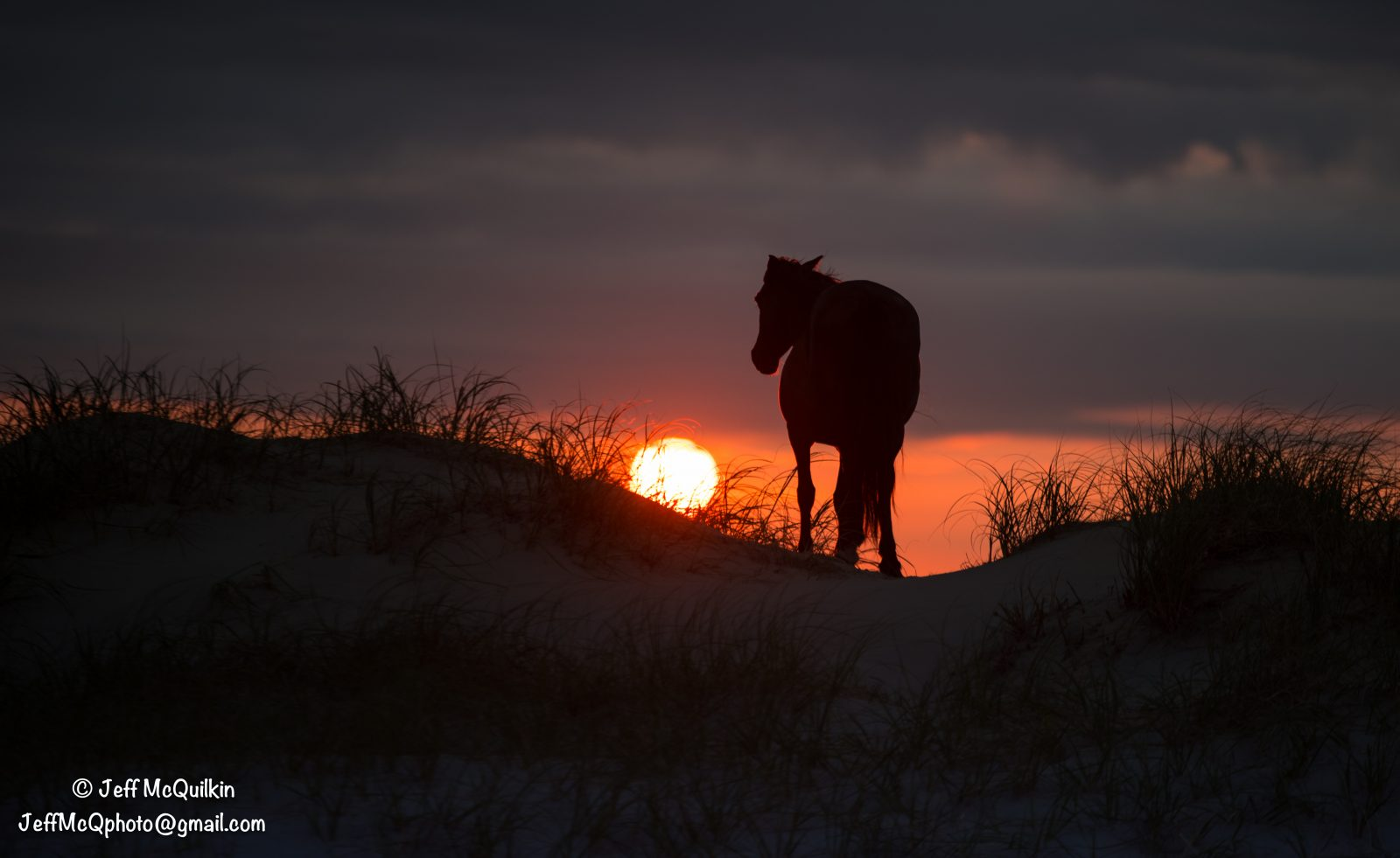 Wild Spanish Mustang at Sunrise – Outer Banks, NC