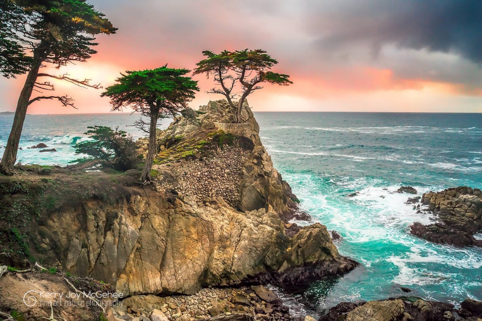 Lone Cypress Tree Sunset