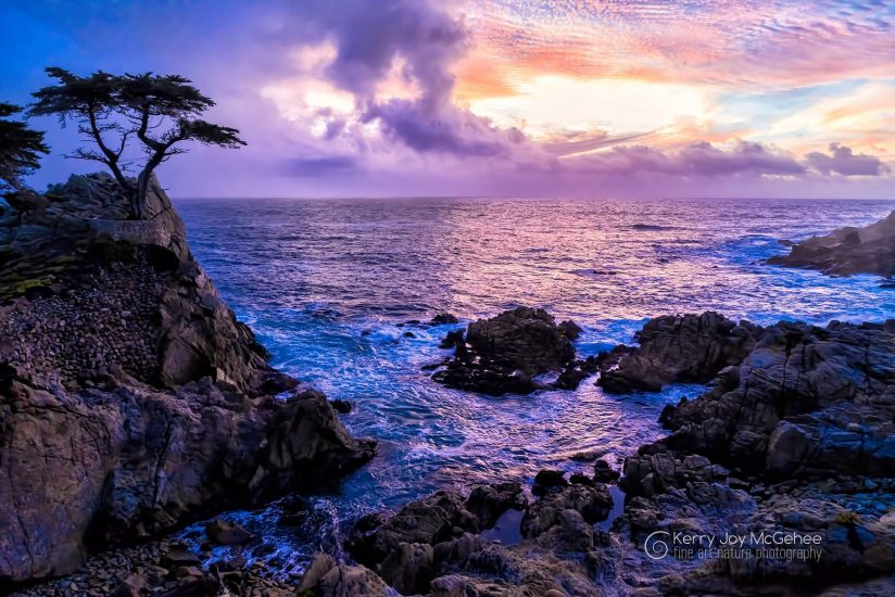 Lone Cypress Twilight