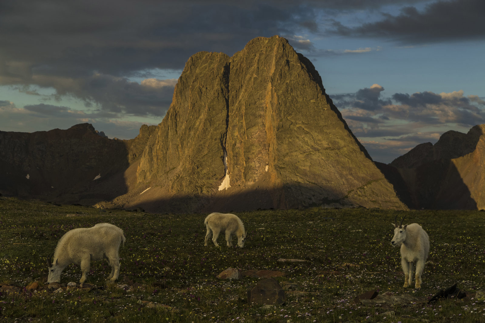 Mountain Goats and Grenadier