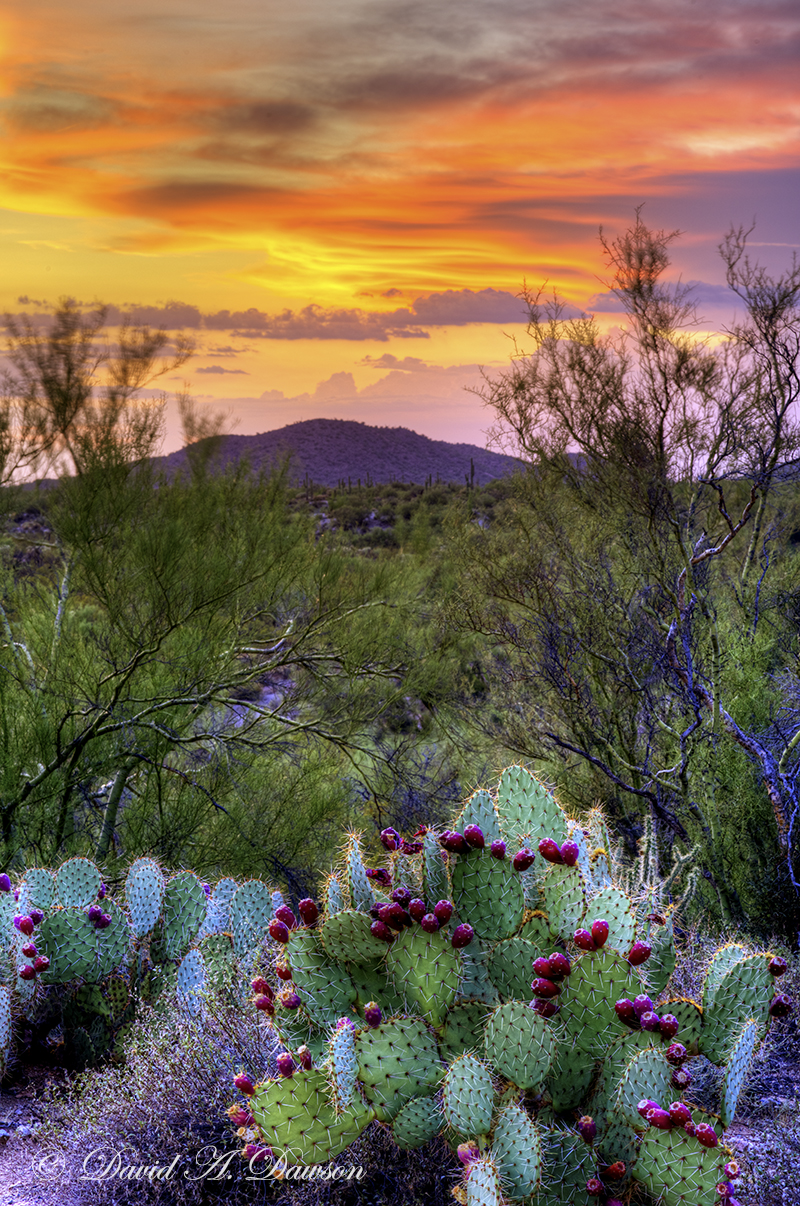 Prickly Pear Sunset
