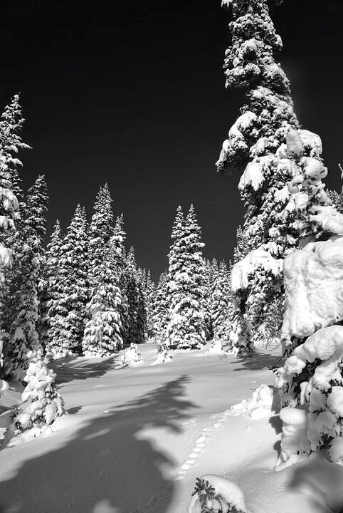 Beautiful Black and White Winter