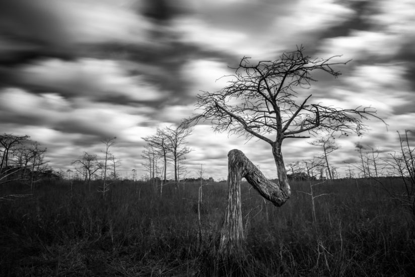 Scared Tree