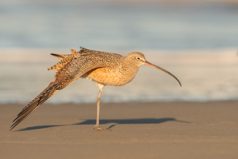 Bird Yoga on beach