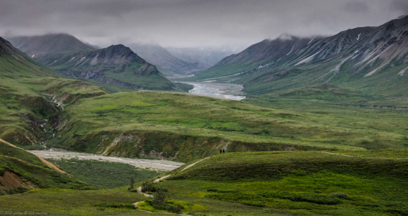 Afternoon Stroll in Denali National Park