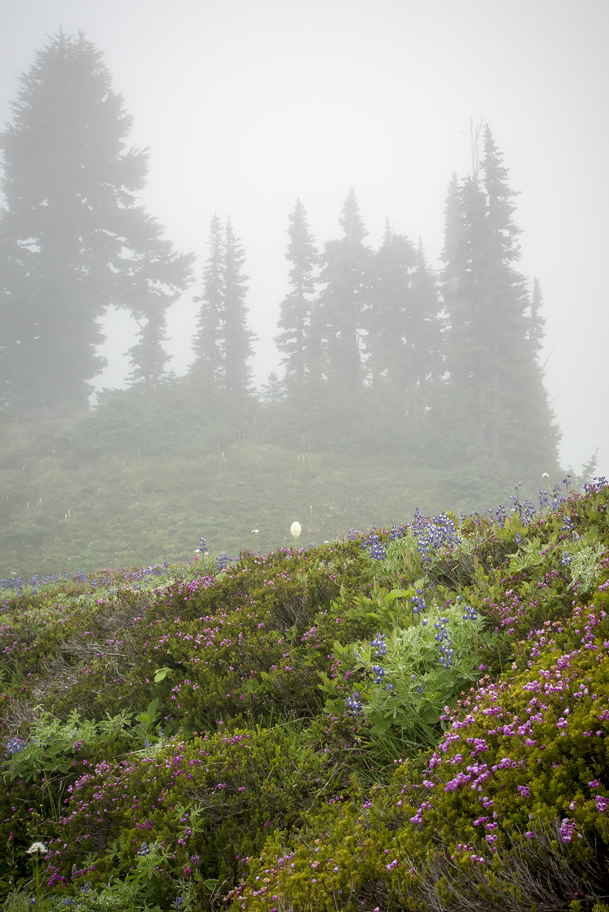 Paradise – even in the fog!
