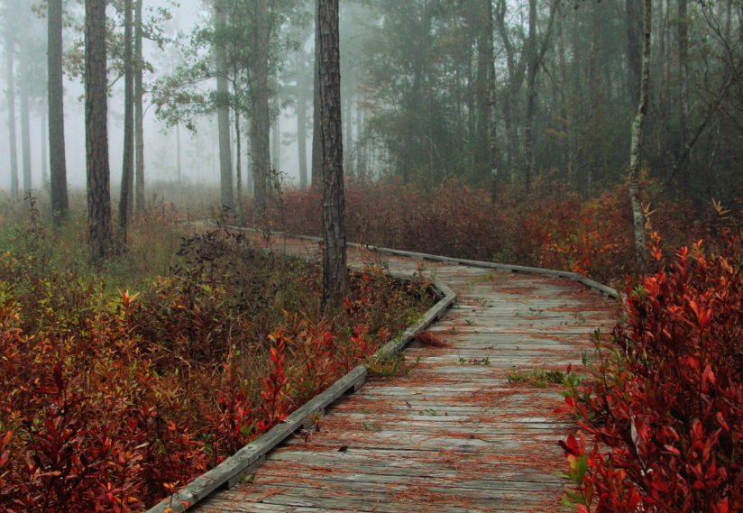 Foggy Morning Boardwalk