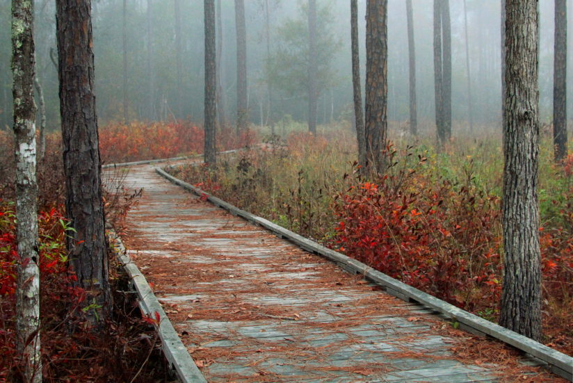 Foggy Morning Boardwalk 2