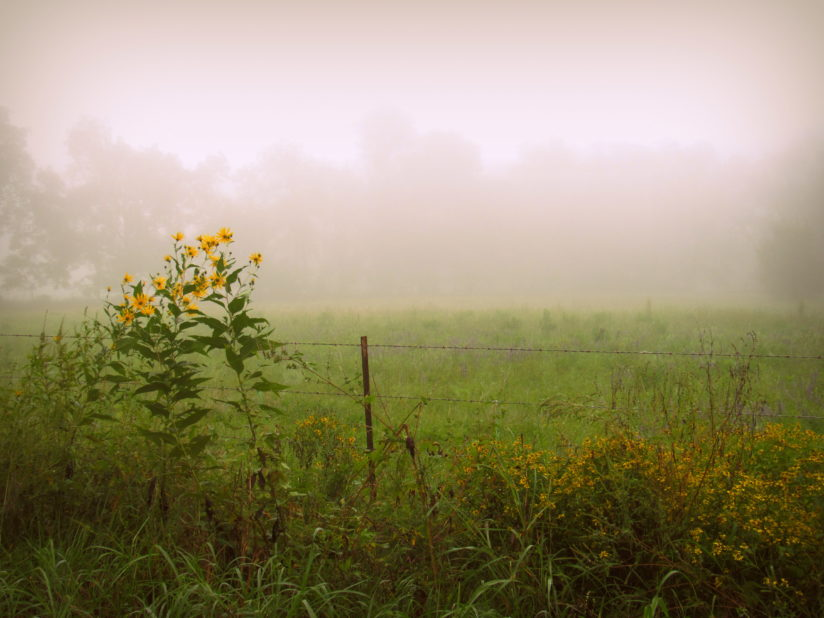 Fog and Wildflowers