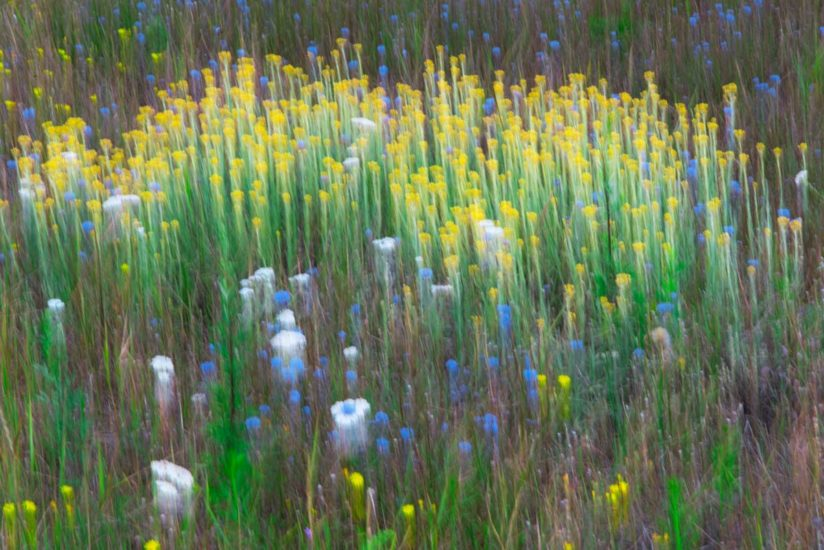 Blured spring meadow