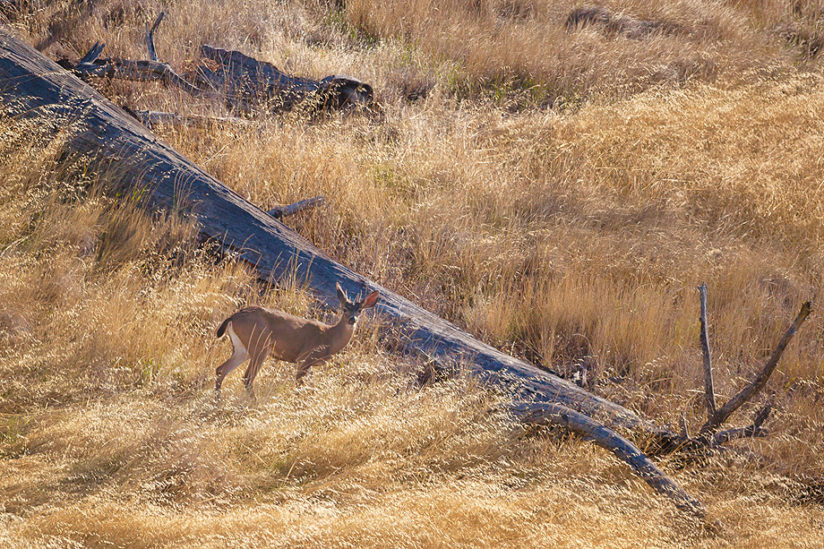 Muley in the Morning