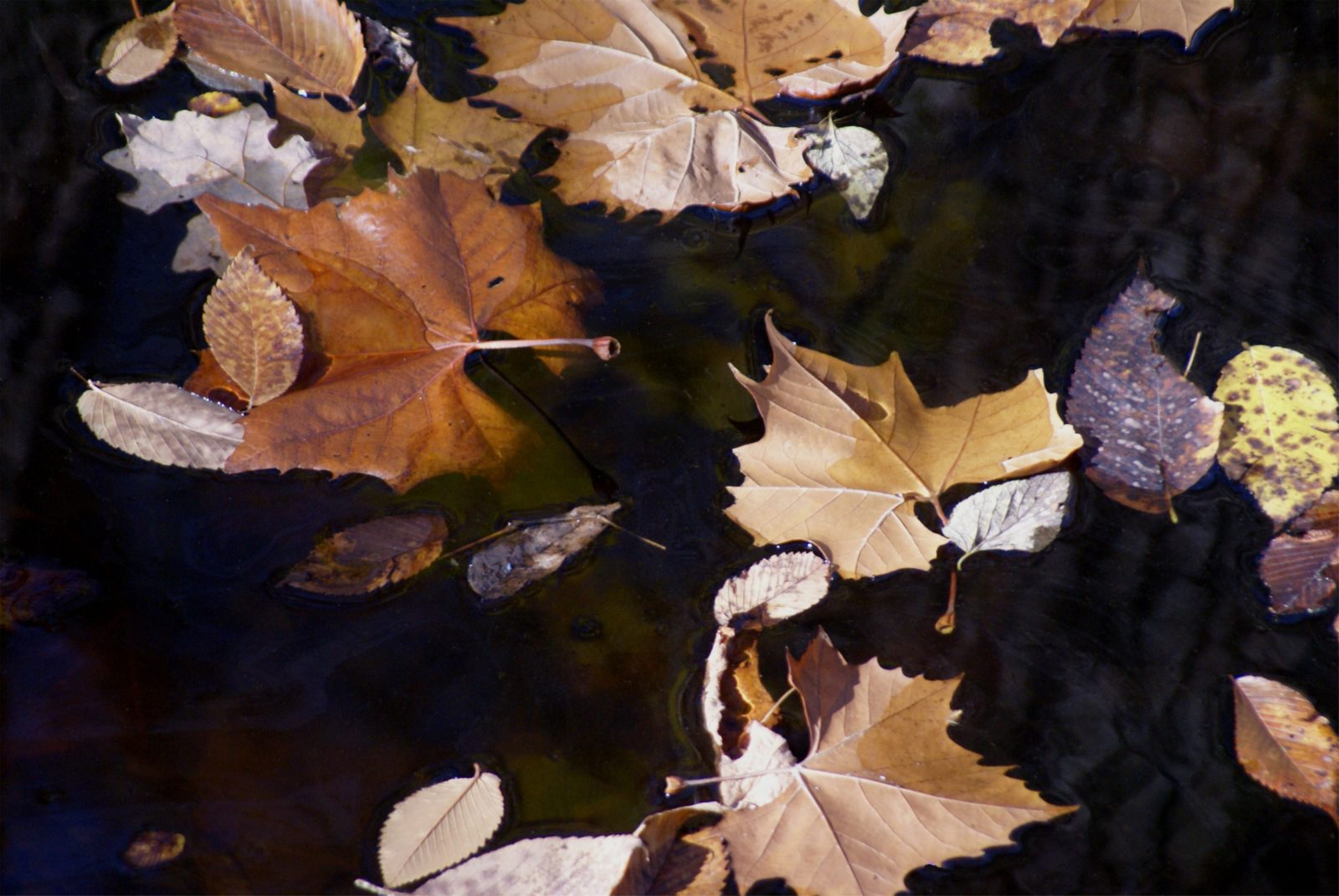 Leaves in stream