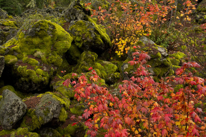 Fall Color at the Lava Flow
