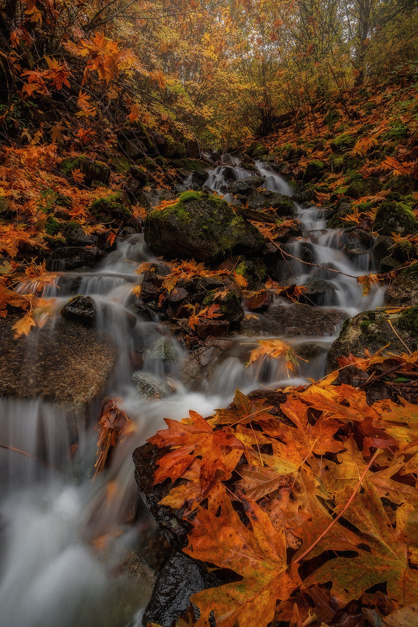 Autumn Flows