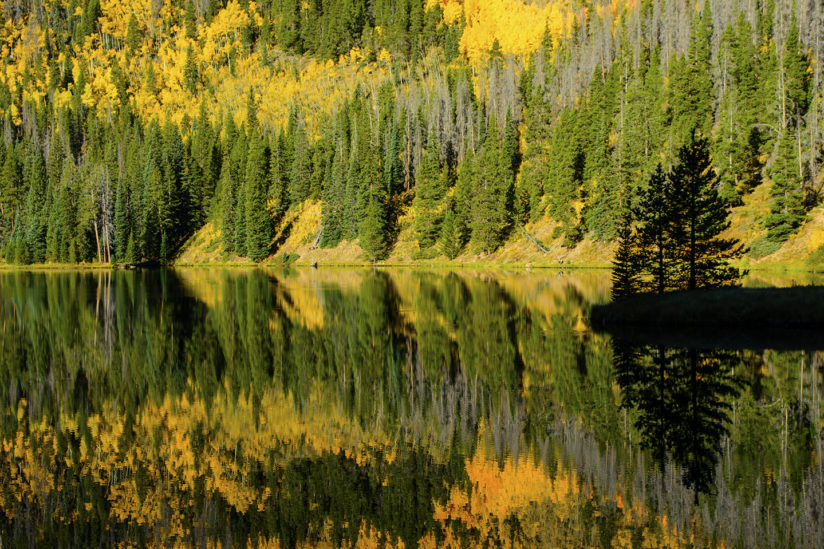 Aspen Gold Reflection