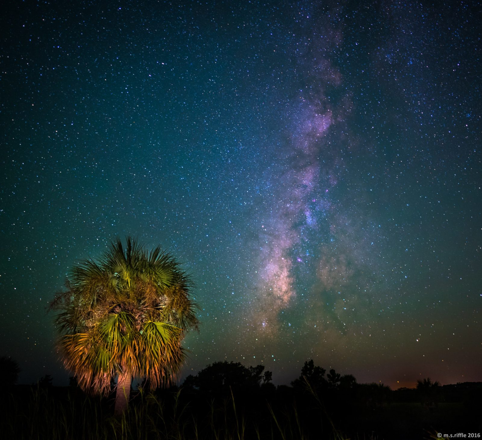 Palm Tree and Milky Way