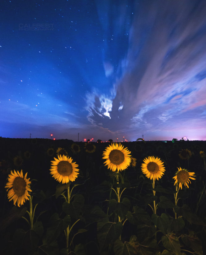 Sunflowers and Moon