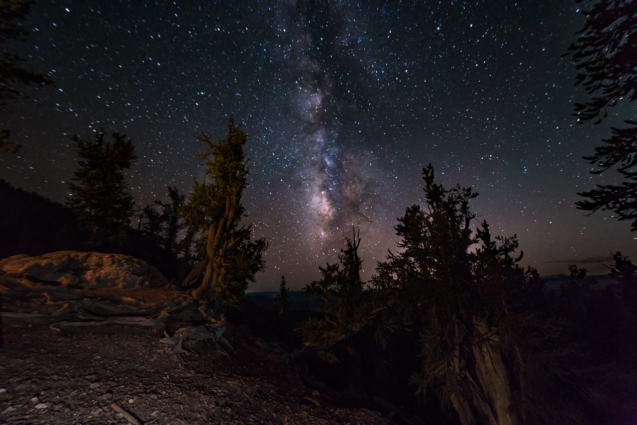 Ancient Bristlecones and the Milky Way