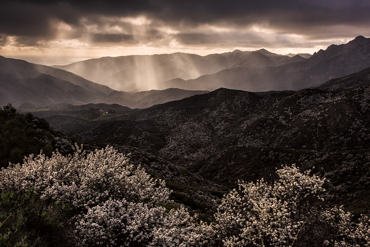 Winter Rain, Santa Monica Mountains, California