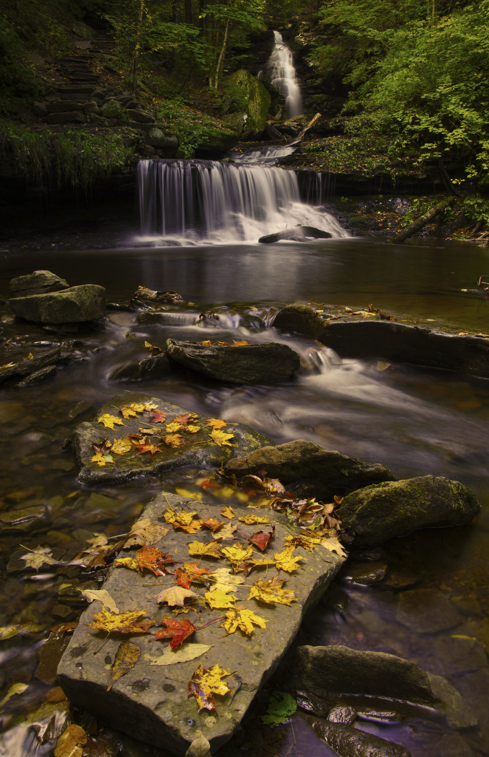 Fall Comes to Ricketts Glen