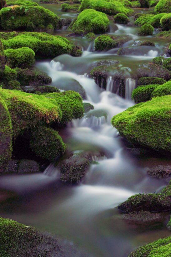 Flowing Water and Moss