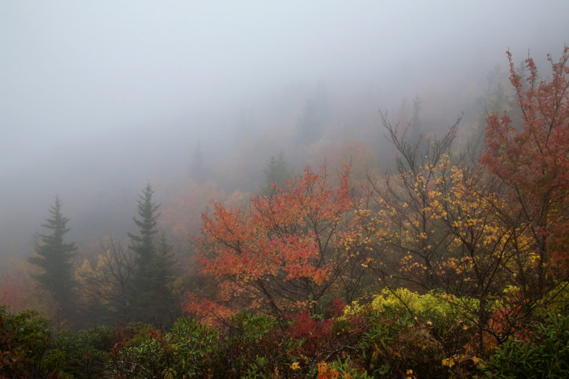 autumn mist, rough ridge