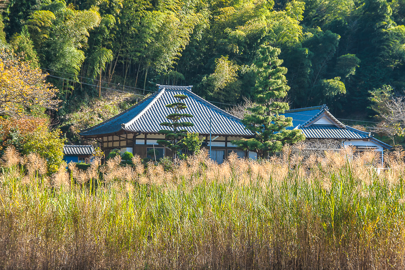 Temple in the Rice Paddy